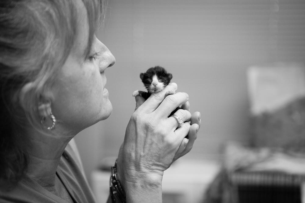 Austin pets alive dating auction