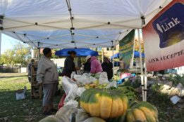 FRUIT ON DISPLAY: Community members browse produce during a recent Garfield Park Farmers Market. | ALMO CAMPOS/City Bureau