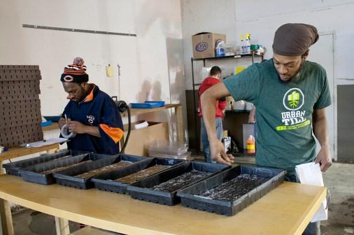 time to till: Farm hand Chuck Taylor, right, prepares trays of seeds at Urban Till. David Pierini/staff photographer