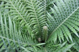Images from within the Garfield Park Conservatory's Fern Room, which reopened to the public on April 22. (Tanya Harris/Contributor)
