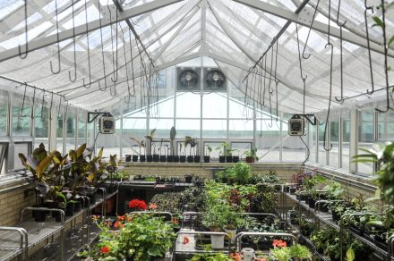 A plant sale to get rid of most of the items at the green room at Austin College and Career Academy was held on Thursday May 25, 2017 in the west side neighborhood of Austin in Chicago.