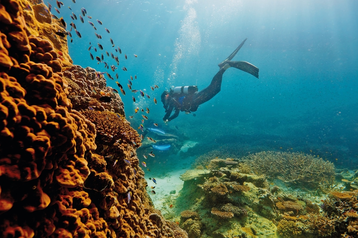 Image result for the great barrier reef