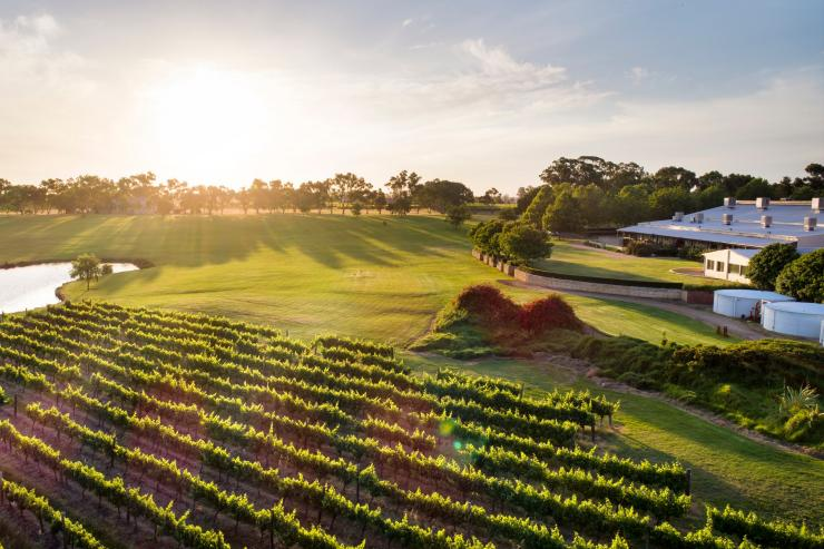Aerial View Of Vineyards At Sandalford Wines In Swan Valley © Joel Barbitta Dmax Photography