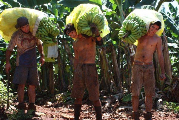Brigáda práce na farmě v Austrálii