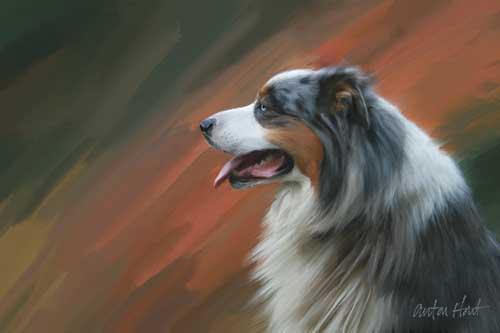Share Your Australian Shepherd Art