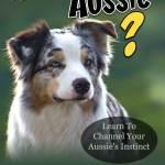 Four Key Dog Training Tips To Help You Lead Your Australian Shepherd