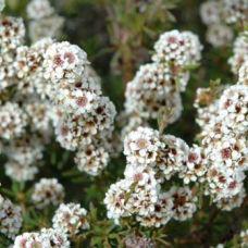 fragonia-smallweb