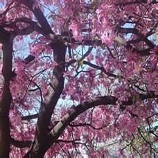 rosewood-flowers-500