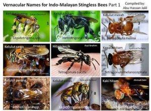 malaysia-bee