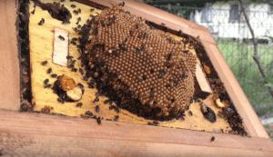 Hive split