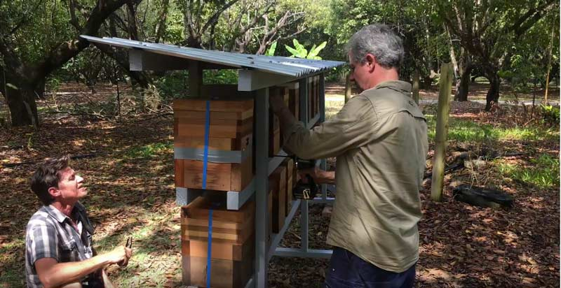 Two guys looking at a stingless bee farm rack