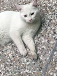 Cat peeing on carpet behavior - Porn pictures