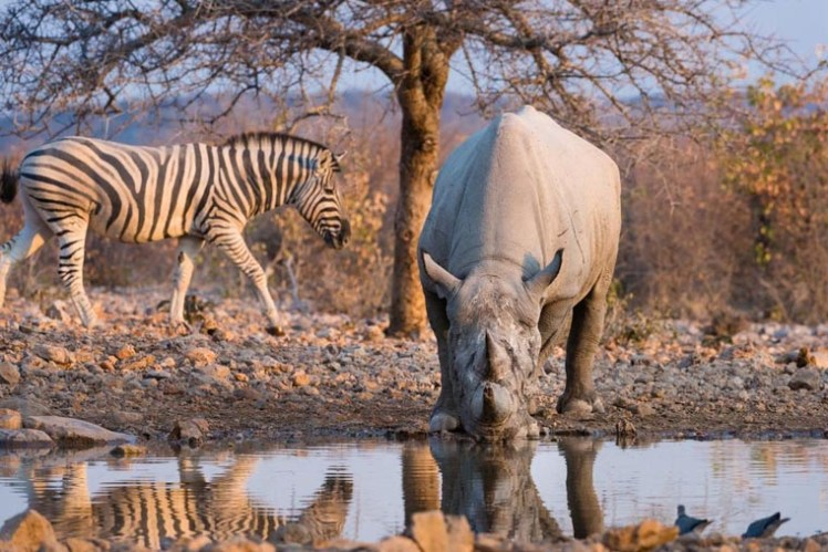 namibia-wings-ongava-lodge-waterhole_760