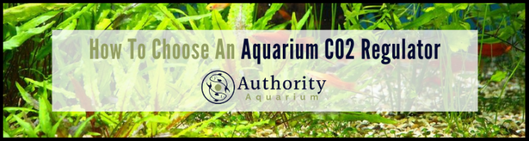 How To Choose An Aquarium CO2 Regulator