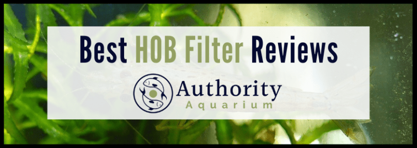 Best HOB Filter Reviews