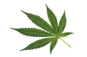 marijuana and autism