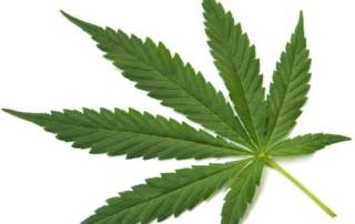marijuana-and-autism