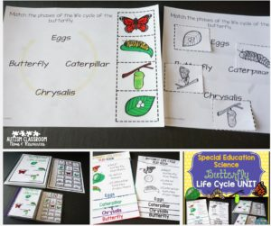 Purchase Butterfly Life Cycle Unit: Science in Special Education