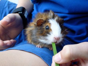 A guinea pig from the study. The skin conductance sensor can be seen on the child's wrist.