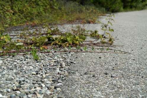 piste ovale michelin vegetation