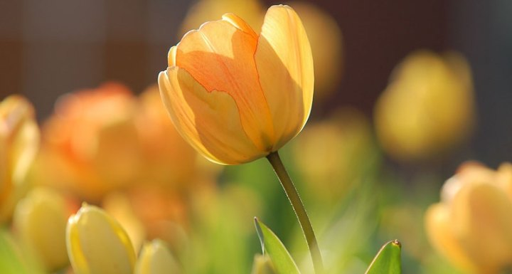 Spring Gardening Tips For You & Yours