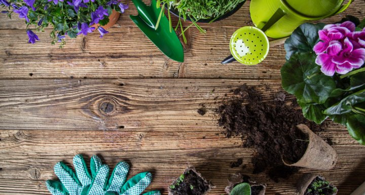 Boost Your Home's Curb Appeal with These Springtime Gardening Tips
