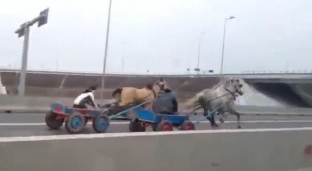 horse romania