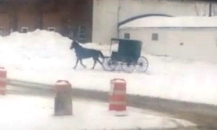 horse drift