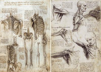 leonardo-da-vinci-human-anatomy-study