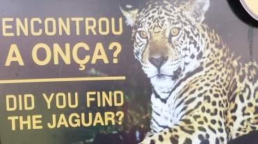 Jaguar não, mas um Pokemon simpático eu achei