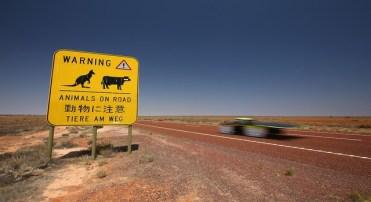 Placa de estrada australiana indica o perigo de travessia de cangurus e bovinos (Mark Kolbe/Getty Images for The World Solar Challange)