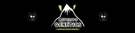 Mephisto Genetics. Toothless Alien Smoke Report