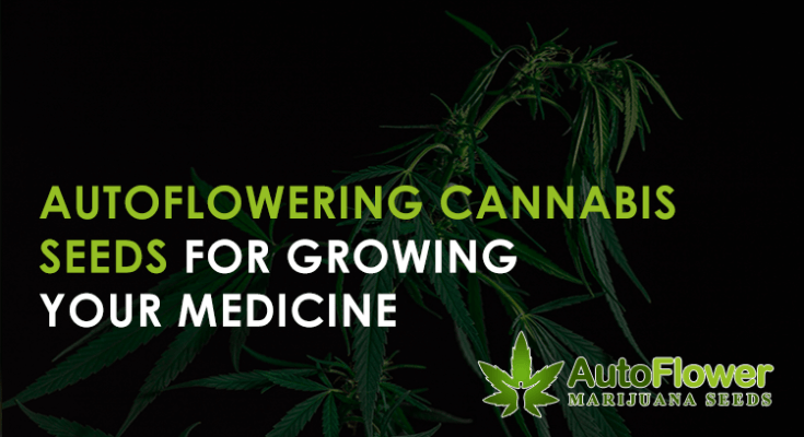 medical autoflowering cannabis seeds