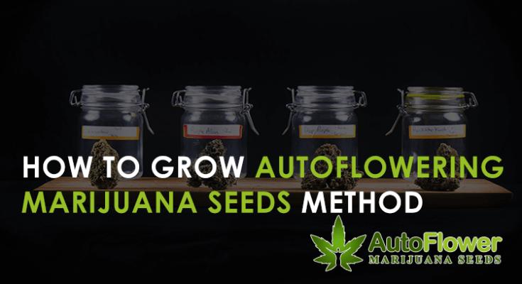growing method autoflowering cannabis