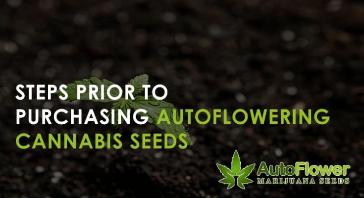 autoflowering marijuana online