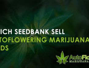 online marijuana seed bank