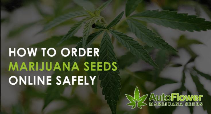 how to order marijuana seeds online