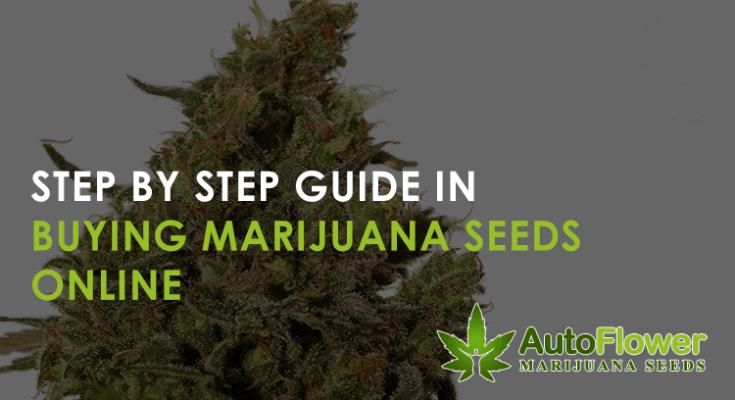 marijuana seeds buy online