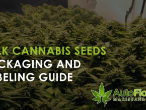 can you buy marijuana seeds in colorado