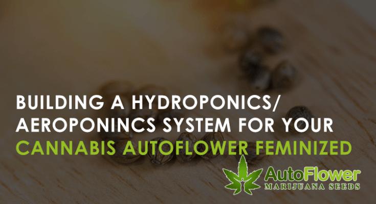 hydroponics auto feminized cannabis