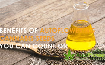 benefits of autoflowering cannabis seeds
