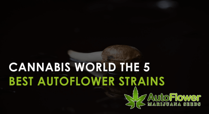 best autoflower strains