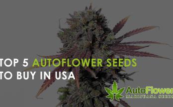 autoflower seeds usa