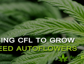cfl marijuana grow
