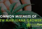 mistakes of new marijuana growers