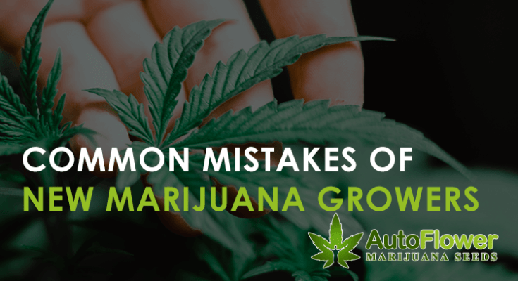 mistakes of new marijuana growers