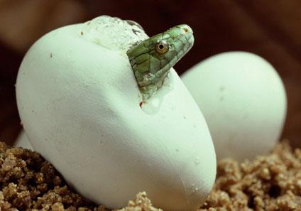 Resultado de imagen para el huevo de la serpiente
