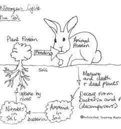 diagram showing the nitrogen cycle [ 1104 x 934 Pixel ]