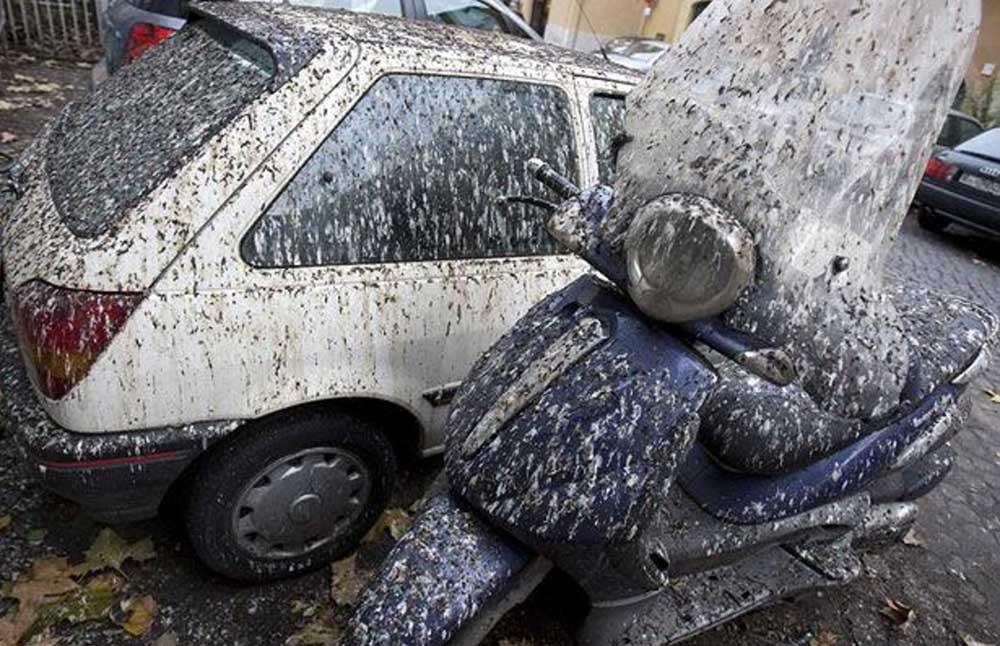 Caca pajaro coche