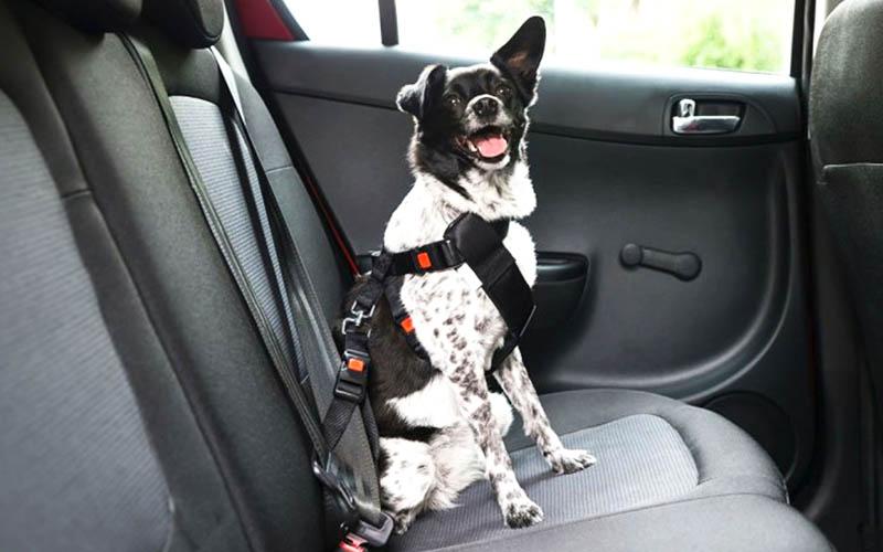 ¿Cómo hago para que mi perro viaje seguro en el coche?